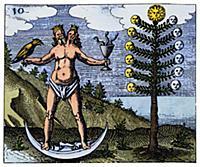 Алхимия. Изображение Лунного Дерева и Гермафродита