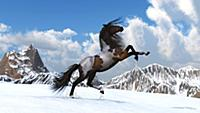 Свобода.  Конь резвится в горах.