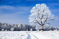 Серебро, Заснеженные деревья на лазури неба