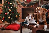 Новый год и Рождество. Джек-рассел-терьер и Новошо
