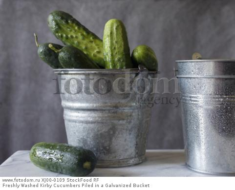 Freshly Washed Kirby Cucumbers Piled in a Galvanized Bucket