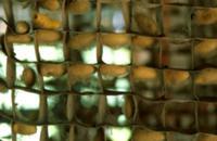 Шелкопряд в домашних условиях