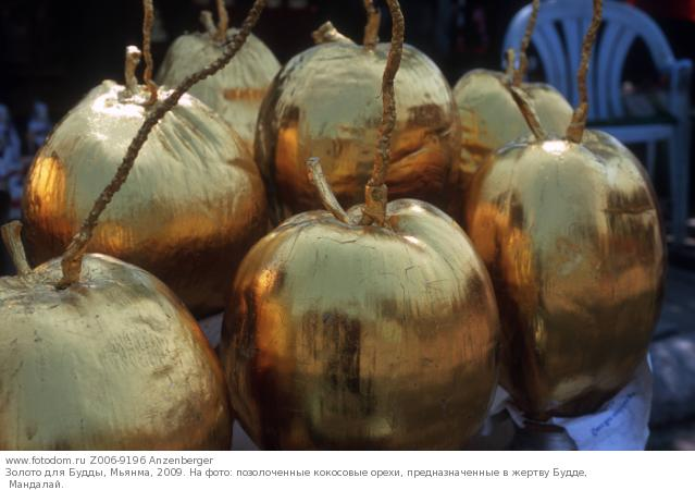Золото для Будды, Мьянма, 2009. На фото: позолоченные кокосовые орехи, предназначенные в жертву Будде, Мандалай.