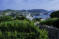 Italy / Pontine Islands / Ponza / 2015 / Wineyard