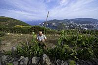 Italy / Pontine Islands / Ponza / 2014 / Wineyard