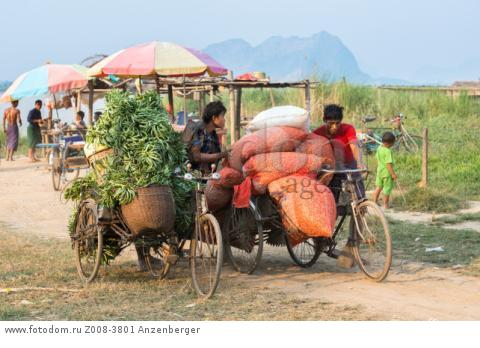 MYANMAR / Kayin State / Hpa-an / There are a lot of vegetable and peanut fields in the surrounding villages. Here on the bank of the Thanlwin River, the greens and peanuts are sorted out, loaded on trishaws and bring the goods to the Hpa-an market. 