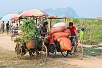 MYANMAR / Kayin State / Hpa-an / There are a lot o