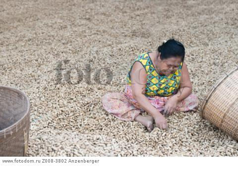 MYANMAR / Kayin State / Hpa-an / There are a lot of peanut fields in the surrounding villages. Here on the banks of the Thanlwin River, the peanuts are sorted out and loaded on trucks. В© Mario Weigt / Anzenberger