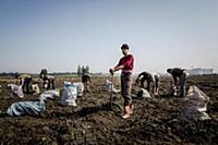 Turkey / Hatay / Syrian Refugee / 2014 / He is a w