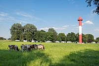 GERMANY / Lower Saxony / Berne / 2015 / Cow pastur