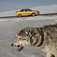 Кочевники Монголии. Часть 2-я