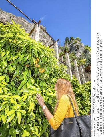 ITALY ( Italien , Italia ) / Lombardy ( Lombardei , Lombardia ) / Lake Garda ( Gardasee , Lago di Garda ) / Limone / La Limonaia del Castel   © Toni Anzenberger / Anzenberger