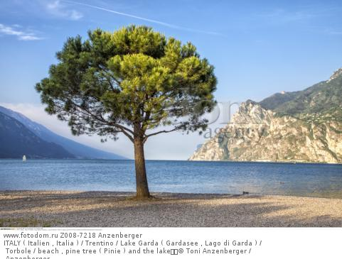 ITALY ( Italien , Italia ) / Trentino / Lake Garda ( Gardasee , Lago di Garda ) / Torbole / beach , pine tree ( Pinie ) and the lake  © Toni Anzenberger / Anzenberger