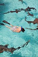 EXUMA, Bahamas. Swimming with docile nurse sharks