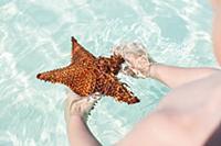 Child with starfish, tourists at the most beautifu