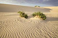 sand dunes, nature reserve, El Jable, Corralejo, L
