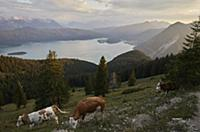 View on the Walchensee, the Karwendel mountains in