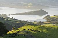 Banks Peninsula, Canterbury, South Island, New Zea