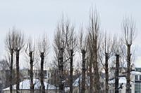 Россия, Ярославль. 3-4 января 2016.