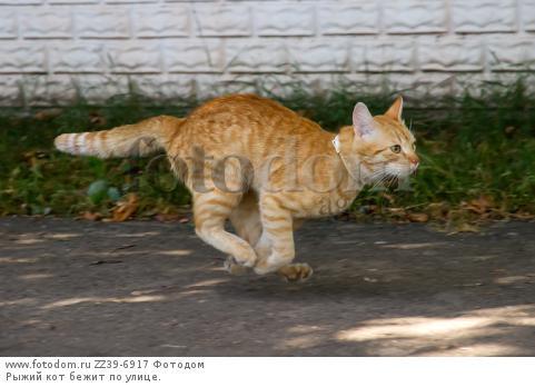 фото кот бежит