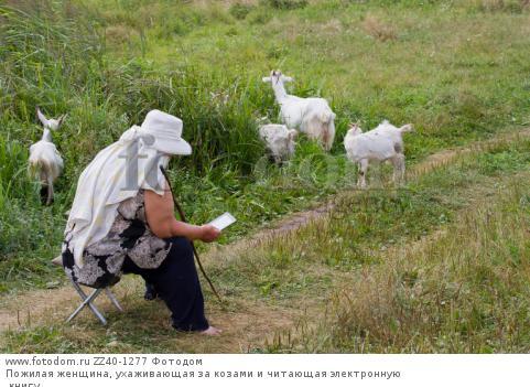 Пожилая женщина, ухаживающая за козами и читающая электронную книгу.