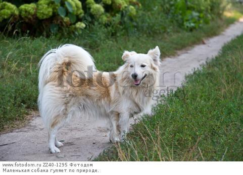 Маленькая собака гуляет на природе.