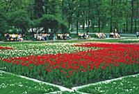 Цветы Александровского сада. Конец 1990-х - начало