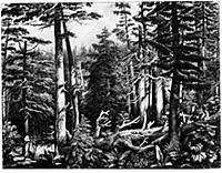 Дремучие леса Аляски. Гравюра начала XIX в.