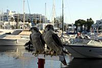 Тунис. На снимке: Порт в городе Сусс.
