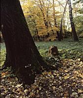 Уголок парка; Государственный мемориальный музыкал