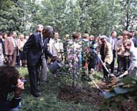Традиция в памятные дни сажать дерево. Государстве