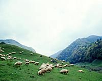 Зеленый луг. В горах Чечни и Ингушетии. СССР. 1980