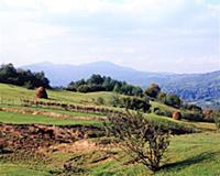 Сено. В горах Чечни и Ингушетии. СССР. 1980-1981 г