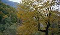 Осень. В горах Чечни и Ингушетии. СССР. 1980-1981