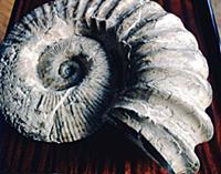 Музейный экспонат. Город Грозный - столица Чечено-