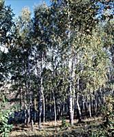 Деревня Ясная Поляна, Тульская область, Щёкинский